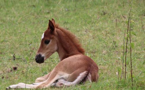 foal 2464872 1920 1166x768